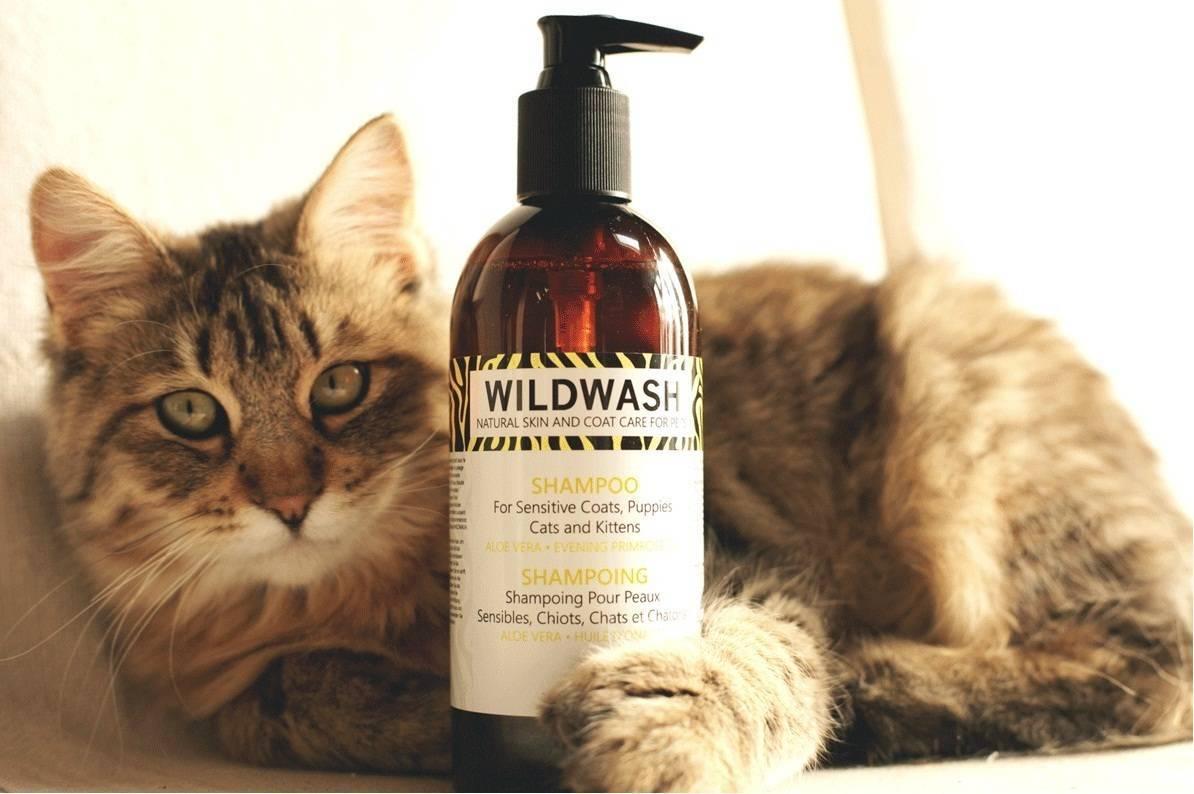 Шампунь для кошек и котят: сухой, от перхоти или от блох, гипоаллергенный и другие