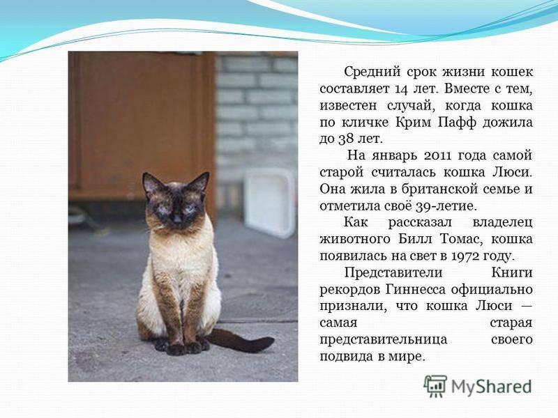 Сколько лет живут кастрированные коты в домашних условиях - кошки и собаки