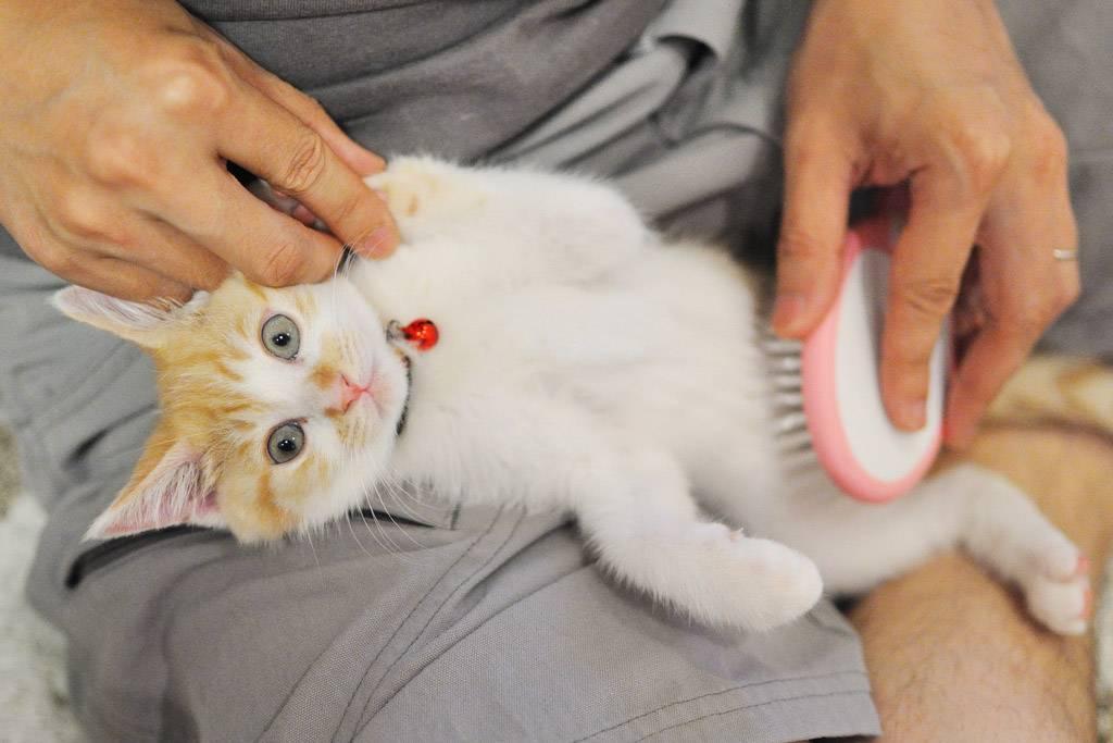 Как выбрать здорового котенка: советы как выбрать здорового котенка: советы