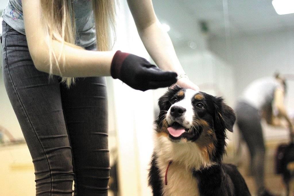 Иерархия в стае собак: как устроена система распределения ролей у питомцев