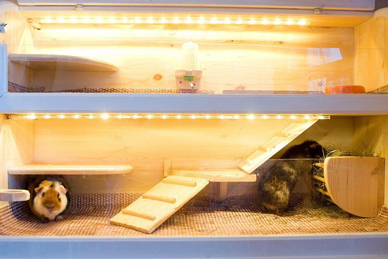 Как сделать домик для морской свинки своими руками в домашних условиях — чертежи и фото