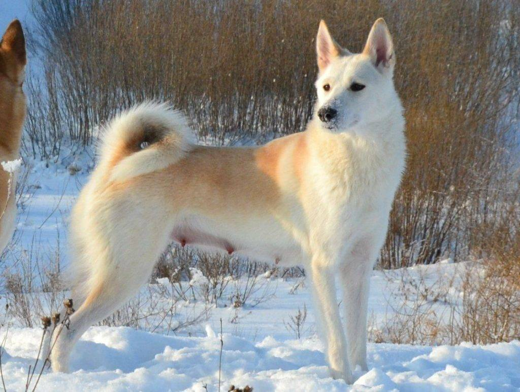 Список опасных пород собак в россии в 2019 году: все породы с новыми поправками