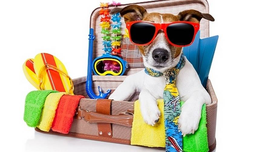 Сколько стоит оставить животное на время отпуска. всё о передержке