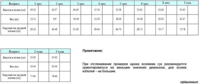 Вес немецкой овчарки по месяцам, таблица - фото и видео щенков с 1 по 12.