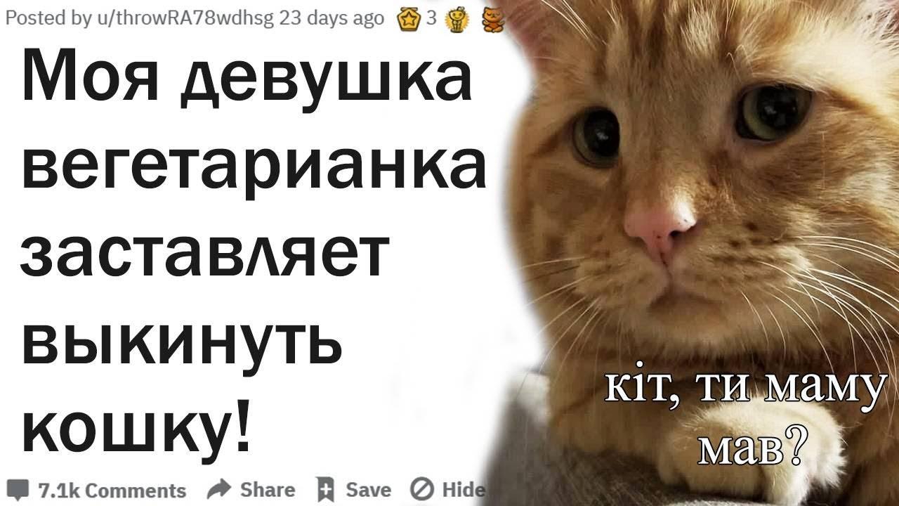 13 вещей, которые нельзя делать с кошкой