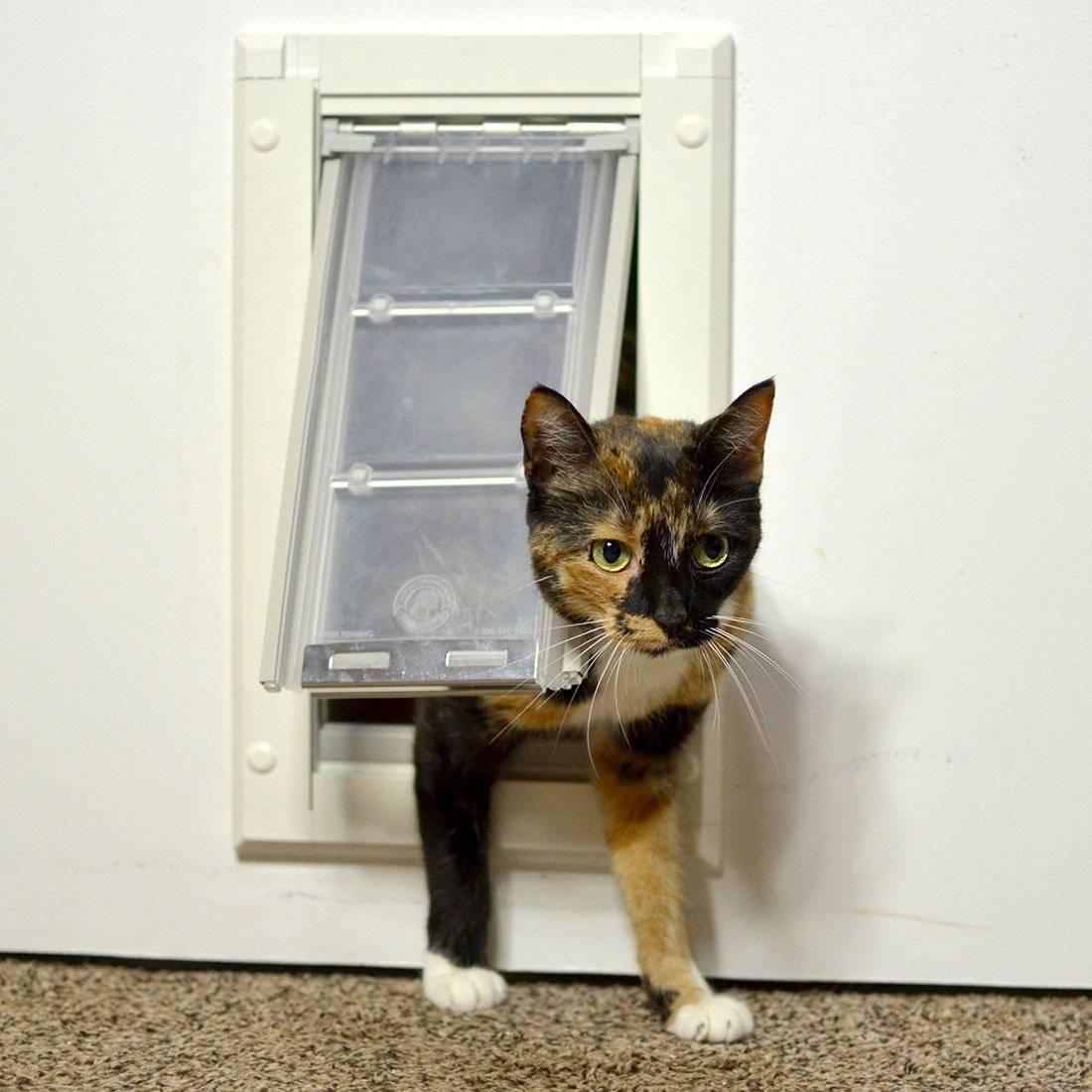 Как сделать в двери проход для кошки? - дачный мастер