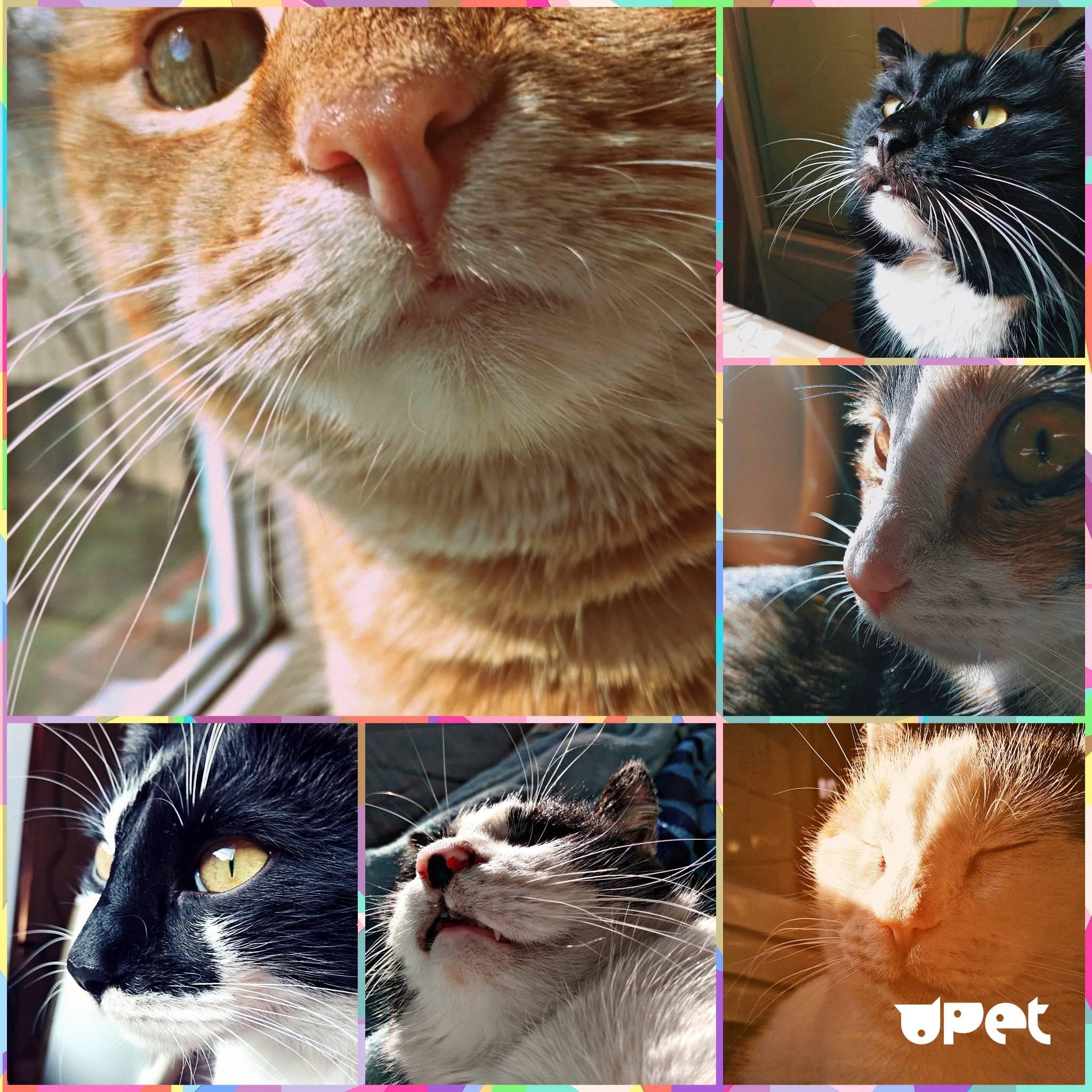 Какой должен быть нос у здоровых кошек, котов и котят и что делать, если он сухой, тёплый или горячий