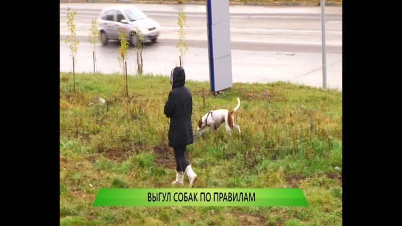 Запрещен ли выгул собак на придомовой территории? определены ли штрафы за нарушение закона?