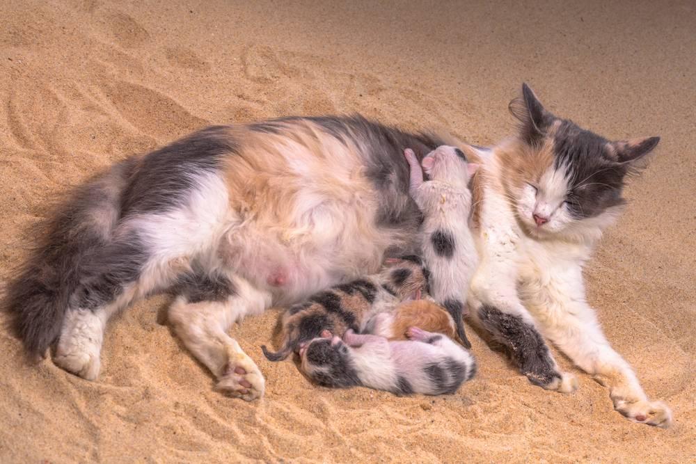 Может ли у кошки родиться один котенок – 6 причин такой особенности