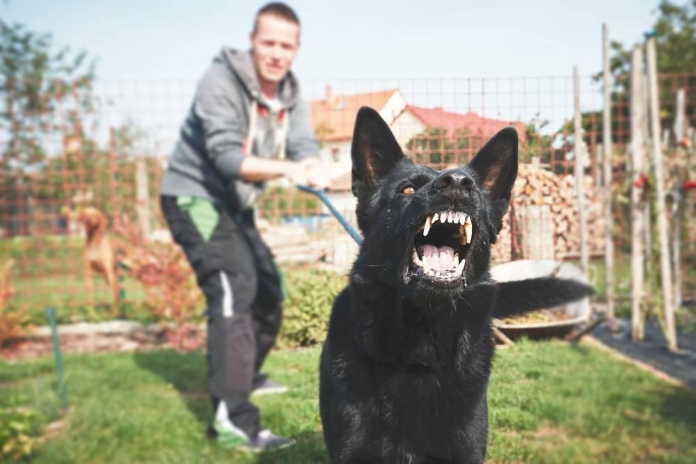 Топ 12 самых бесстрашных пород собак