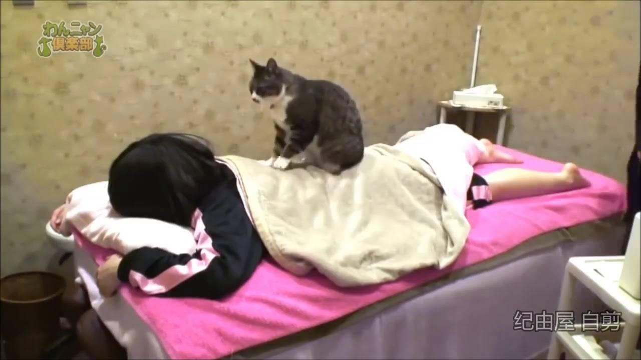 """Почему кошка топчет вас лапками?     блог ветклиники """"беланта"""""""