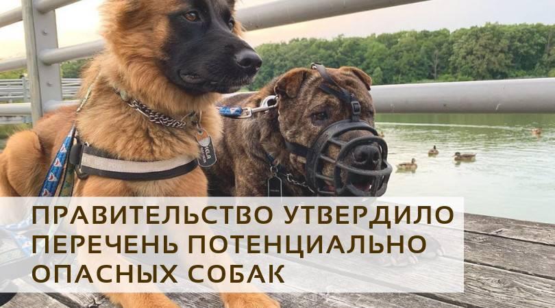 Потенциально опасные породы собак в россии: список, закон