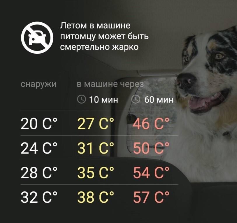 Как сделать так, чтобы ваша собака не перегрелась в жару