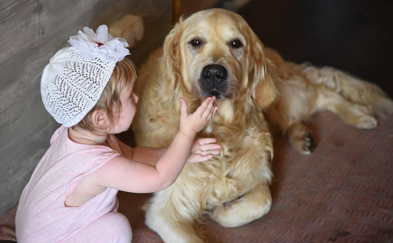 Топ-15 – лучшие семейные породы собак