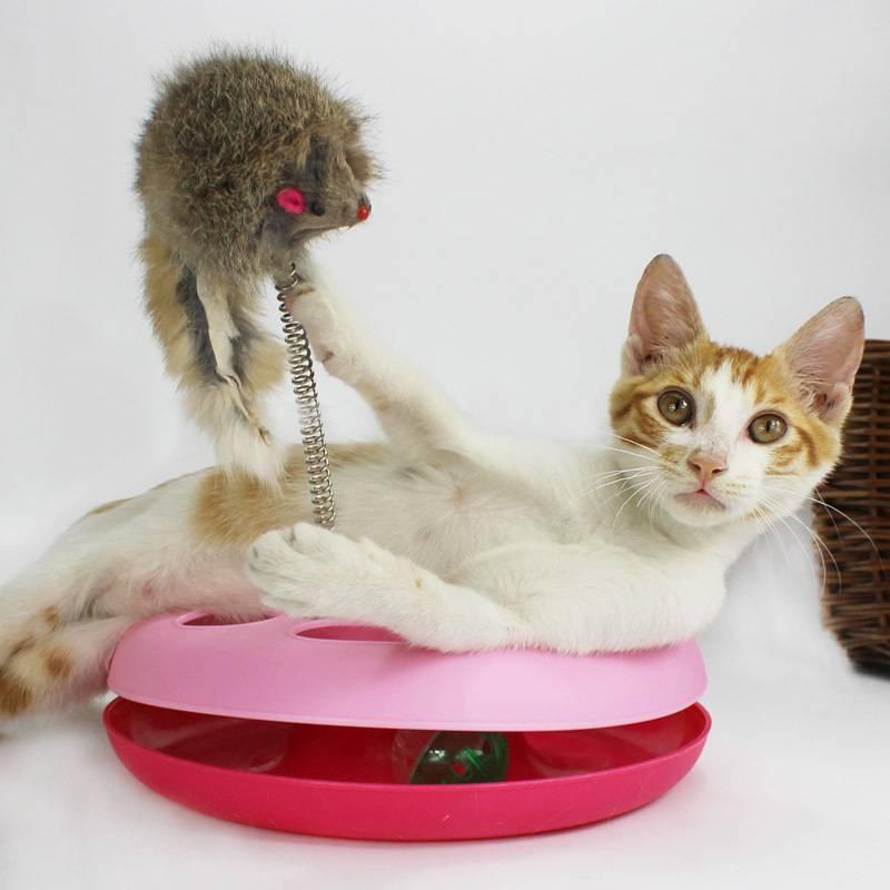 Какие игрушки любят кошки, топ лучших игрушек для кошек