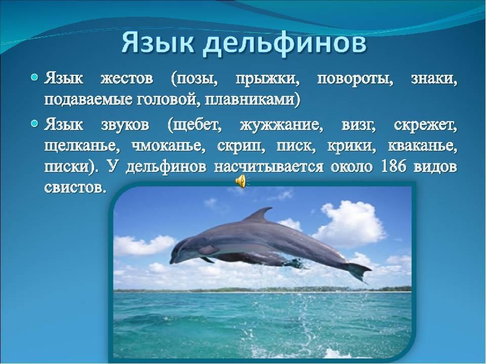 Люди и дельфины: любовь или… почему люди любят дельфинов?