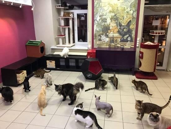 Уютное кафе с  котами, собаками и енотами