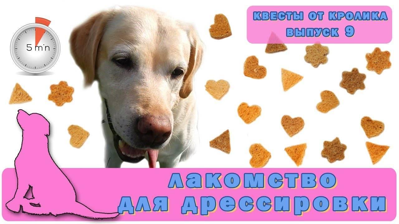 Как сделать прикольную вкусняшку для собаки для дрессировки: рецепты лакомств