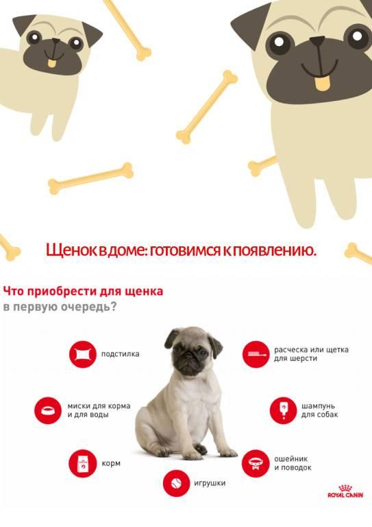 Охранные собаки для квартиры