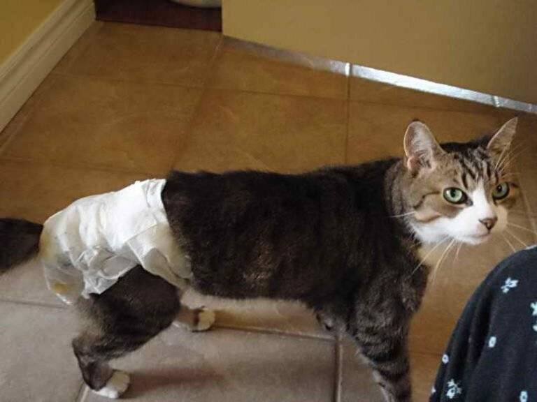 Памперс для кошки своими руками из детского подгузника | my darling cats