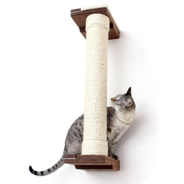 Как отучить кошку драть обои, мебель и стены