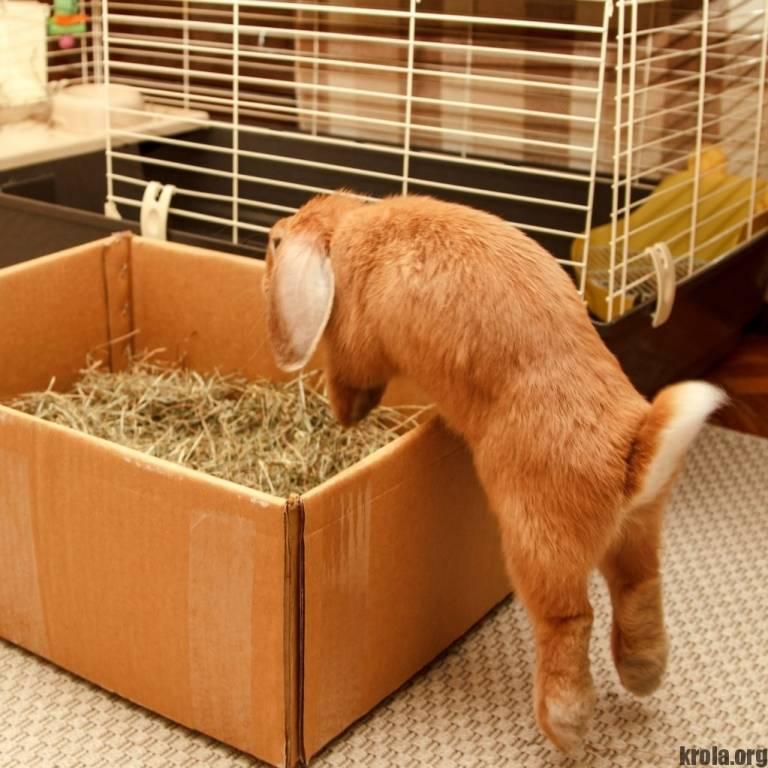 Как ухаживать за карликовым кроликом в домашних условиях