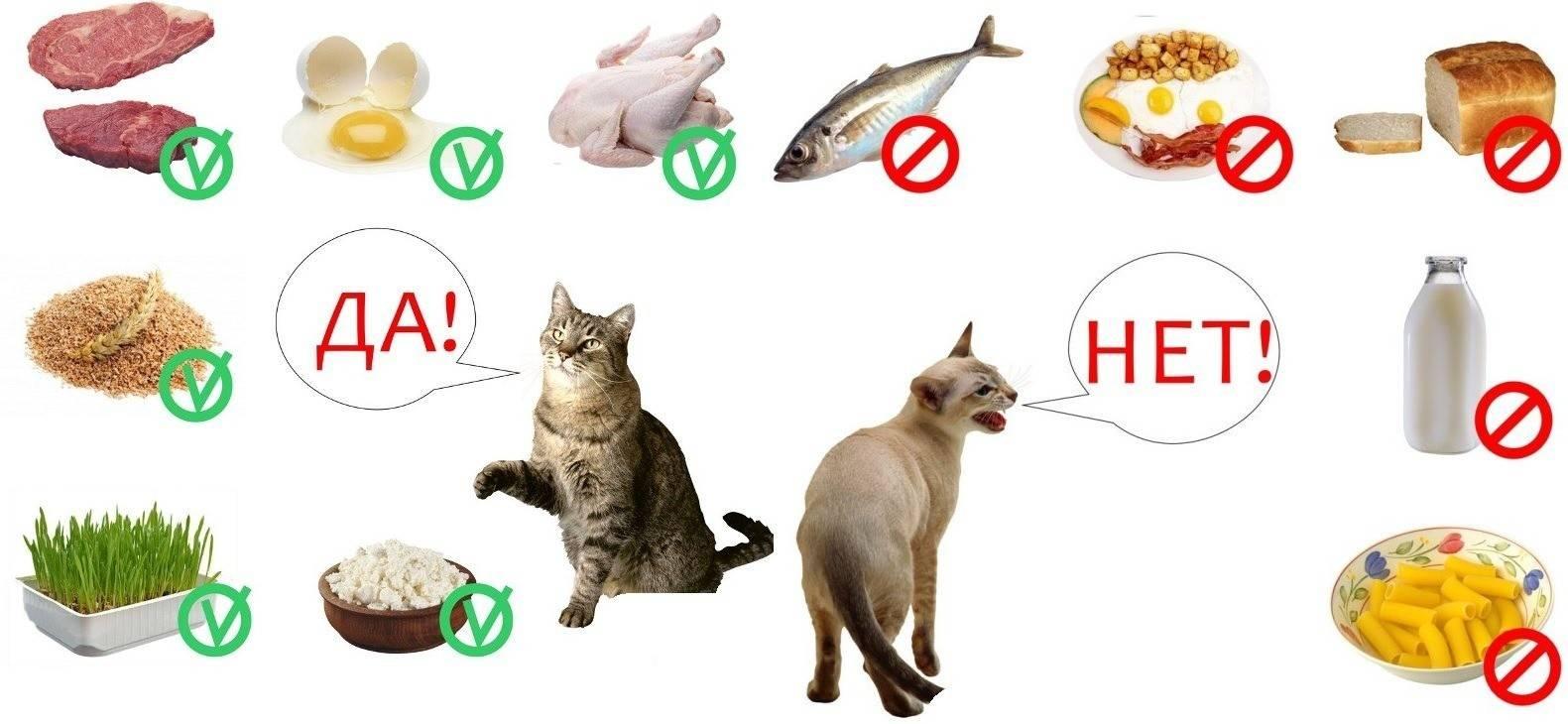 Пищевая поддержка кошек