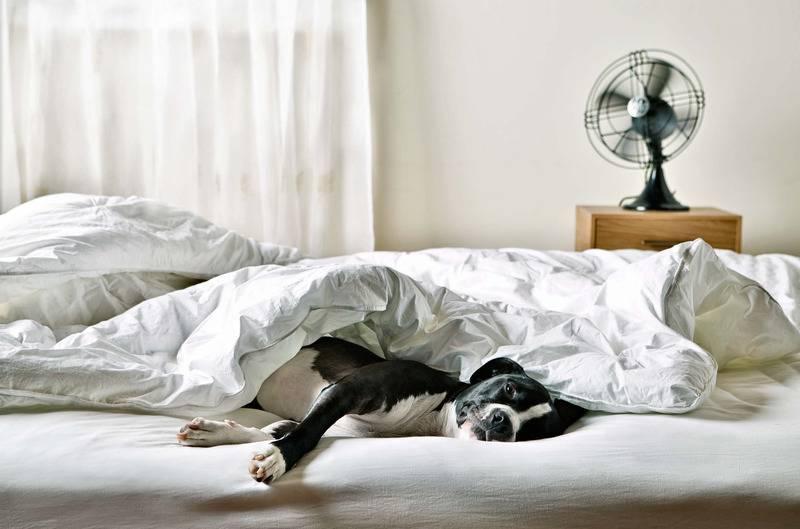 Можно ли разрешать собаке спать в хозяйской постели?