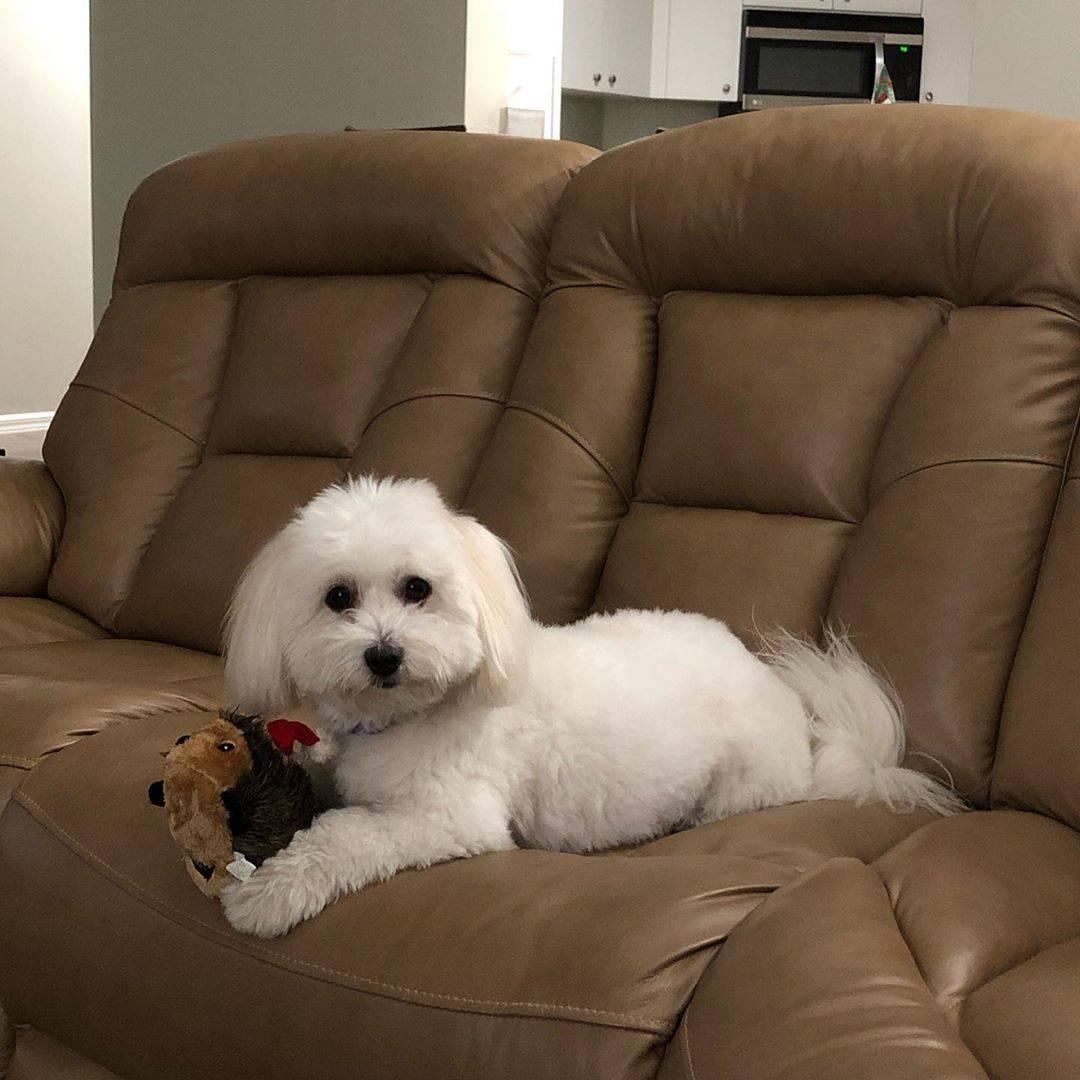 Экзотический пес махтай или тайский риджбек