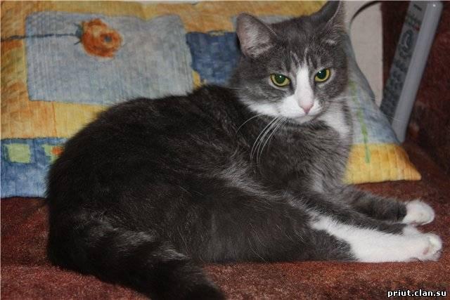 Породистый или беспородный | кошка + кот = котенок