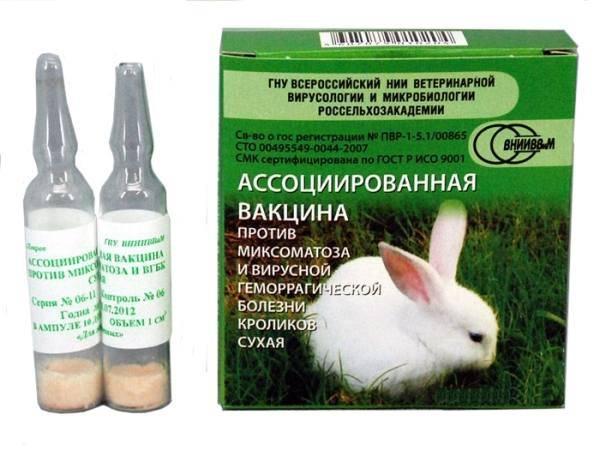 Ассоциированная вакцина для кроликов как разводить и колоть