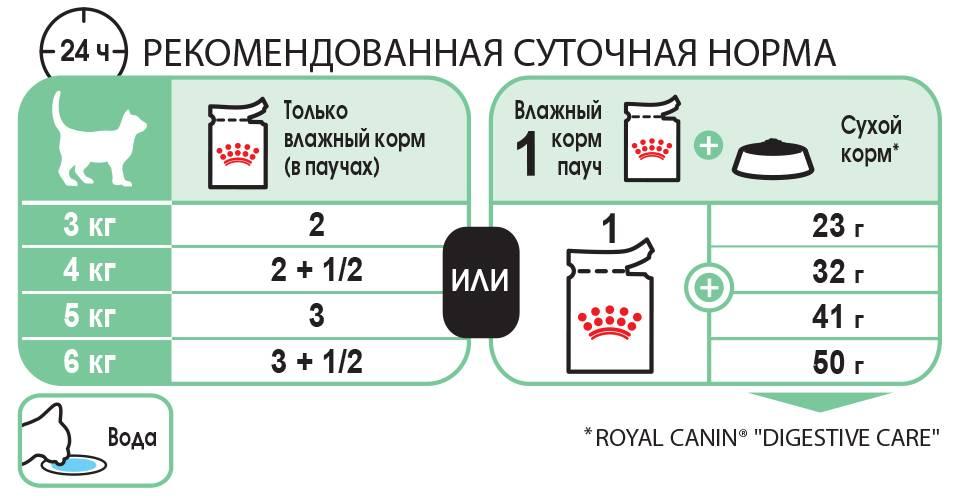 Правильное кормление собак: нормы, время, рацион - кормление