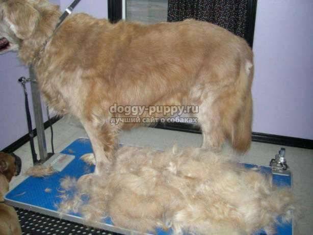 Избавляемся от собачьей шерсти с помощью фурминатора