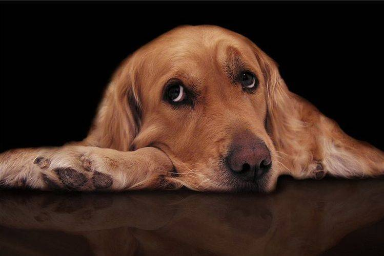 Если у собаки пропал аппетит