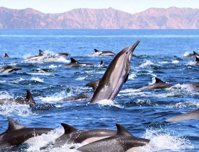 Действительно ли дельфины так умны, как о них говорят? - hi-news.ru
