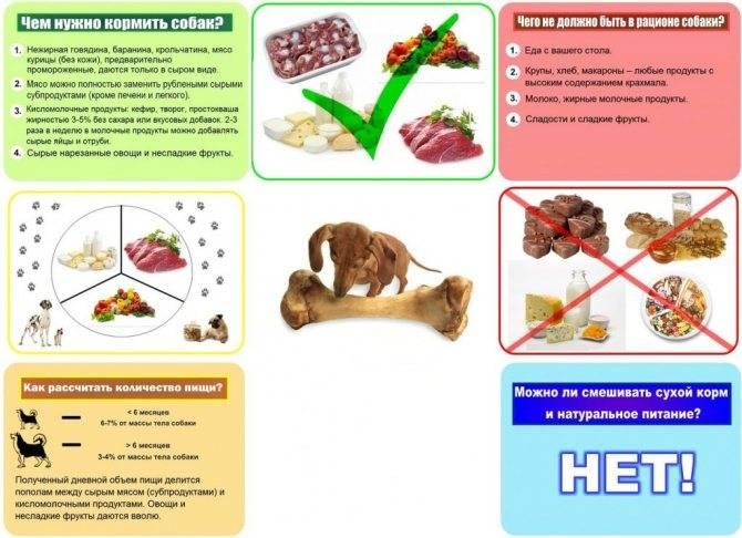 Правила кормления собак, оптимальная частота приема пищи