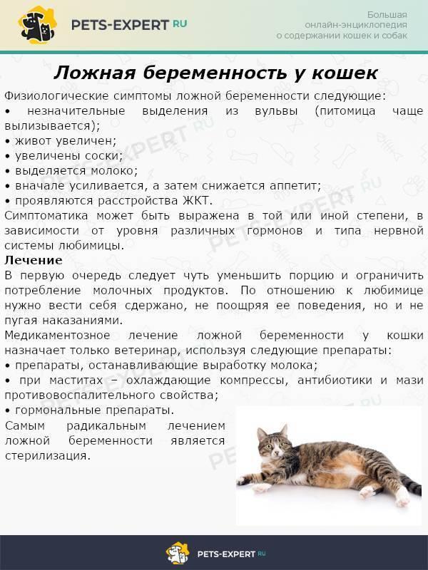 Течка у кошки