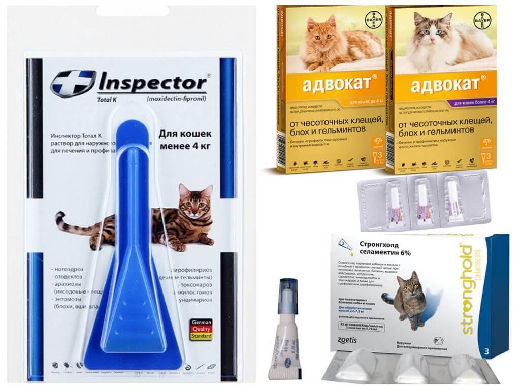 Капли от блох и глистов для кошек – принцип действия, способ нанесения, обзор лучших средств от паразитов