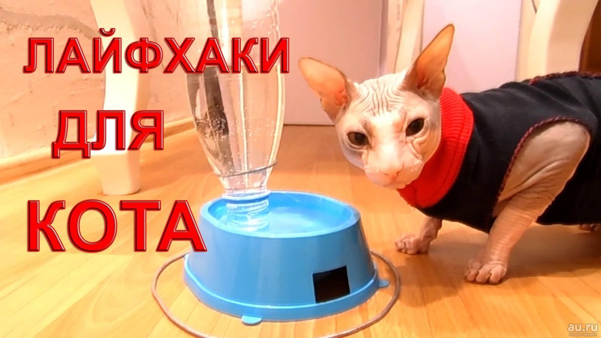 25 гениальных лайфхаков для любителей кошек