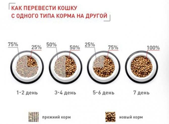 Как перевести собаку на сухой корм с натурального питания