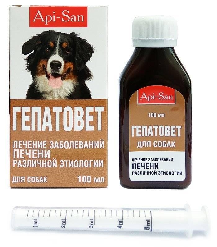 Гепатоджект - купить, цена и аналоги, инструкция по применению, отзывы в интернет ветаптеке добропесик