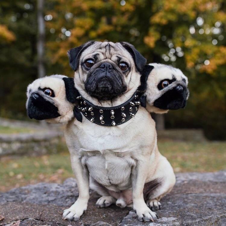 Подборка лучших кличек для собак