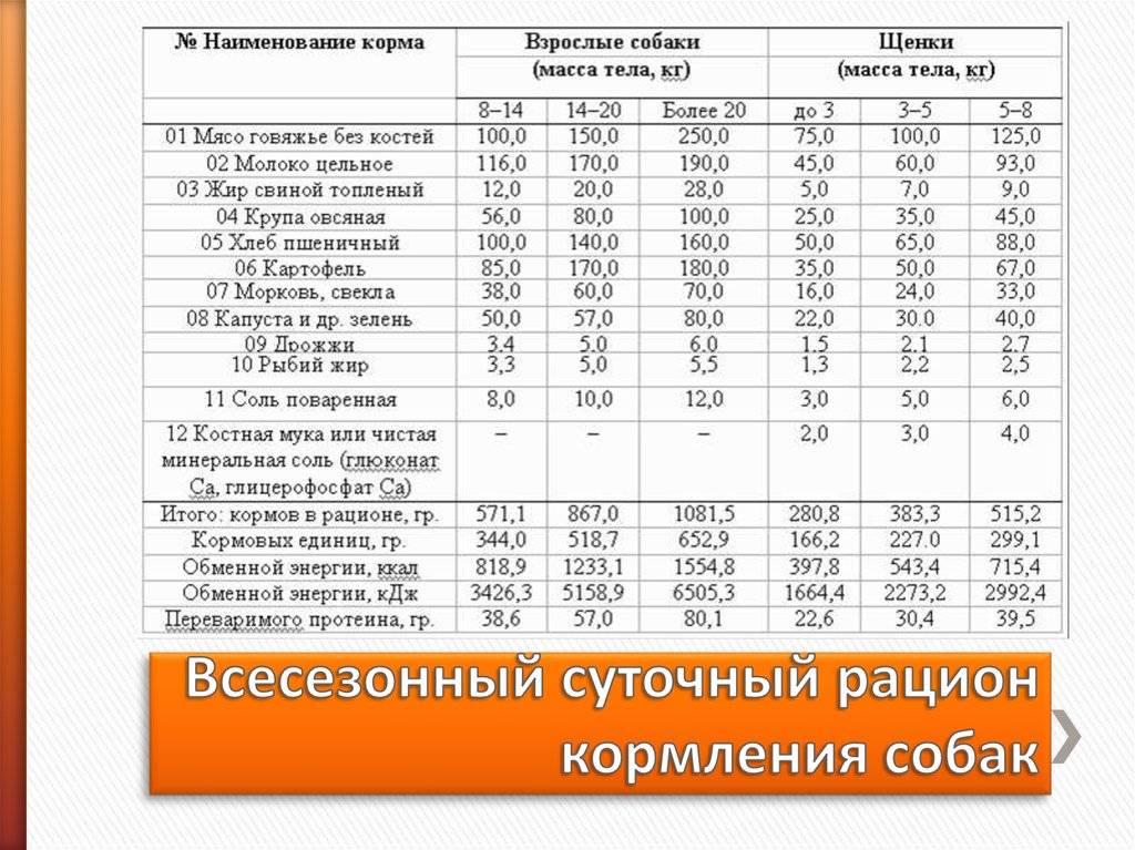 Как правильно кормить русского той-терьера: питание взрослых собак и щенков