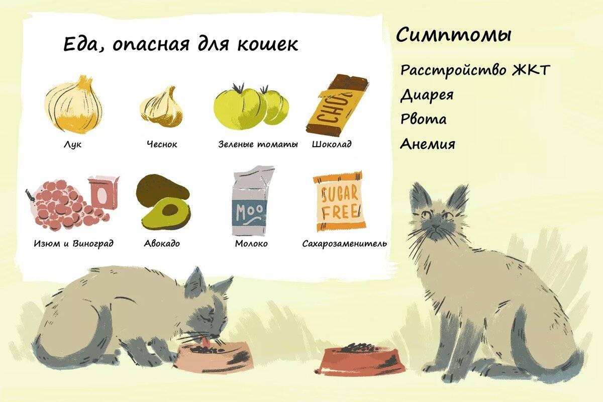 Стоп-продукты в рационе собаки