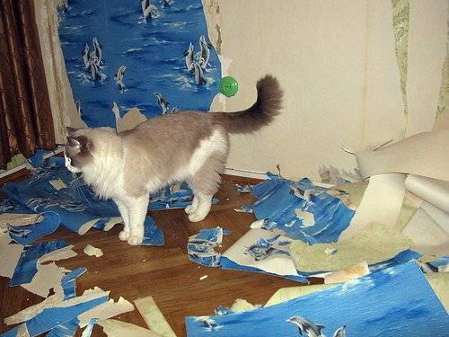Кот метит в доме: что делать, как отучить метить территорию в квартире