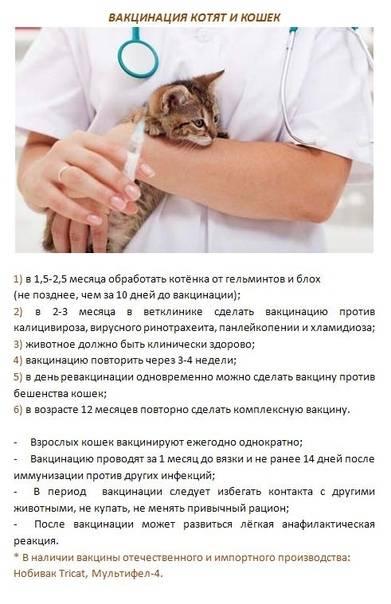 Как дать таблетку кошке или лекарство из шприца, чтобы она не выплюнула?