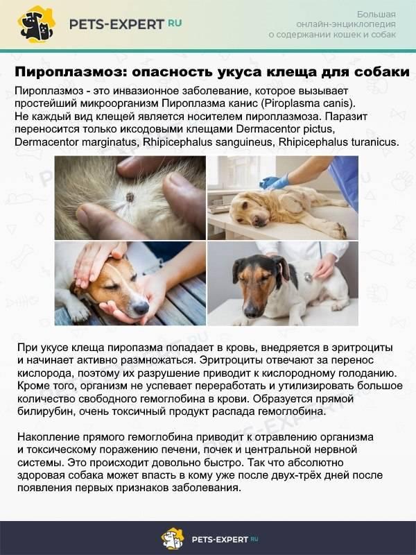 Бешенство и лептоспироз у животных: способы заражения, симптомы, лечение