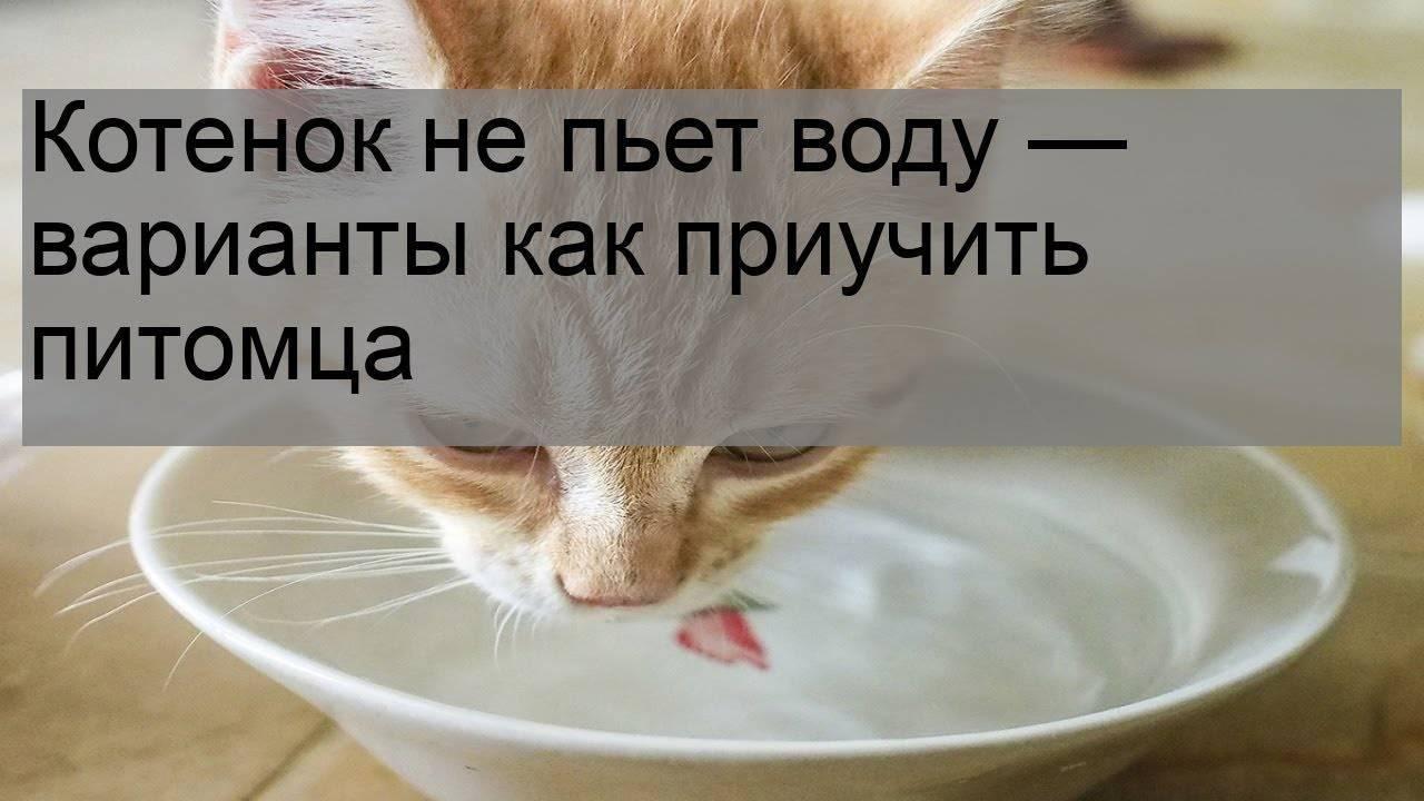 Котенок не пьет воду. что делать? котенок не пьет воду. что делать?