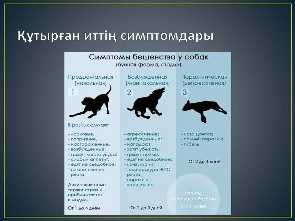 Признаки бешенства у человека после укуса кошки или кота
