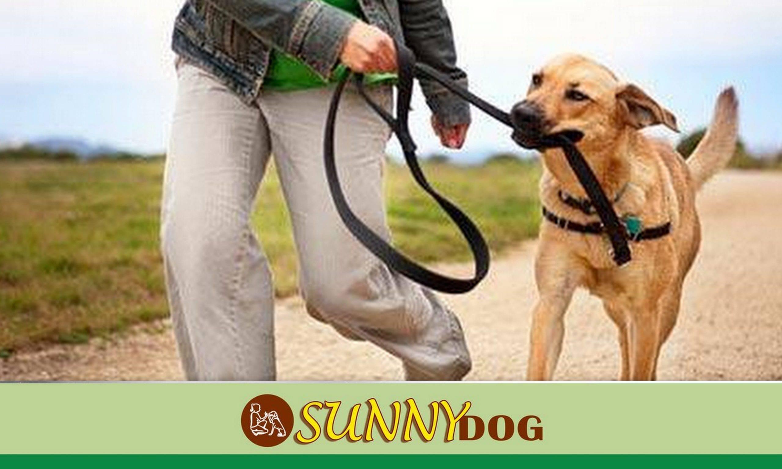Как приучить щенка к поводку: пошаговая методика, выбор аксессуара